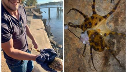 Туристы сняли видео, как играют с осьминогом, не зная, что глядят в лицо смерти