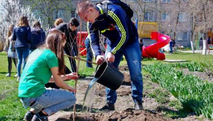 Осенью в Гомеле высадят 14 тысяч деревьев