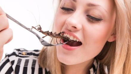 Учёные рассказали, почему люди должны начать есть насекомых