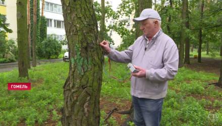 В Гомеле энтузиасты разработали прибор, способный диагностировать здоровье деревьев