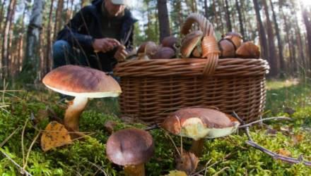 В Жлобинском районе мужчина оставил пасынка в машине и пошёл в лес за грибами. Вернулся через 5 минут – мальчик пропал