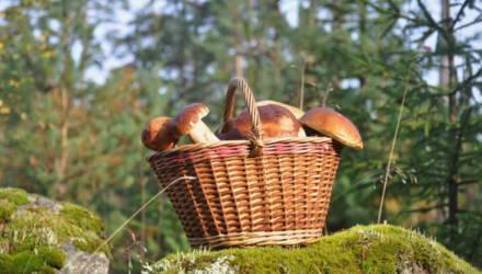 В Калинковичском районе нашли женщину, которая ушла за грибами, заблудилась и более суток провела в лесу