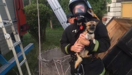 В Ветковском районе спасатели вытащили щенка, который упал в 8-метровый колодец