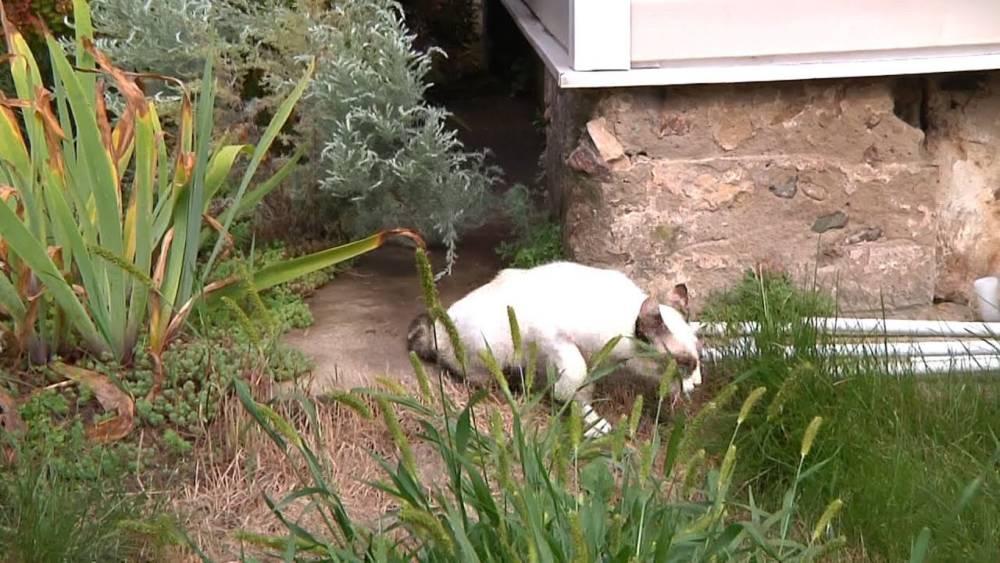Стало известна судьба кошек, которых пенсионер выбросил с 9 этажа в Мозыре