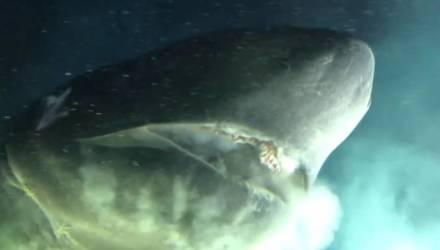 Ученые сняли на видео акулу-монстра величиной с подводную лодку