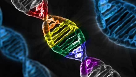 Исследование: геями не рождаются – геями становятся