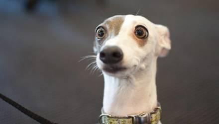 Держите дома собаку - платите, напоминает налоговая
