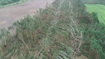 В Гомельском районе грозовой ветер повредил 90 гектаров леса: шокирующие фото и видео с воздуха