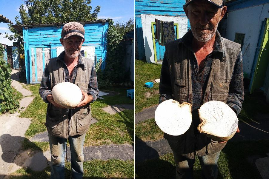 """На Гомельщине мужчина нашёл гигантский """"шампиньон"""", фото выложили в соцсеть – и теперь грибник может заплатить не менее огромный штраф"""