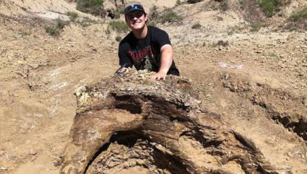 Студент на своих первых же раскопках нашёл череп динозавра, которому 65 млн лет