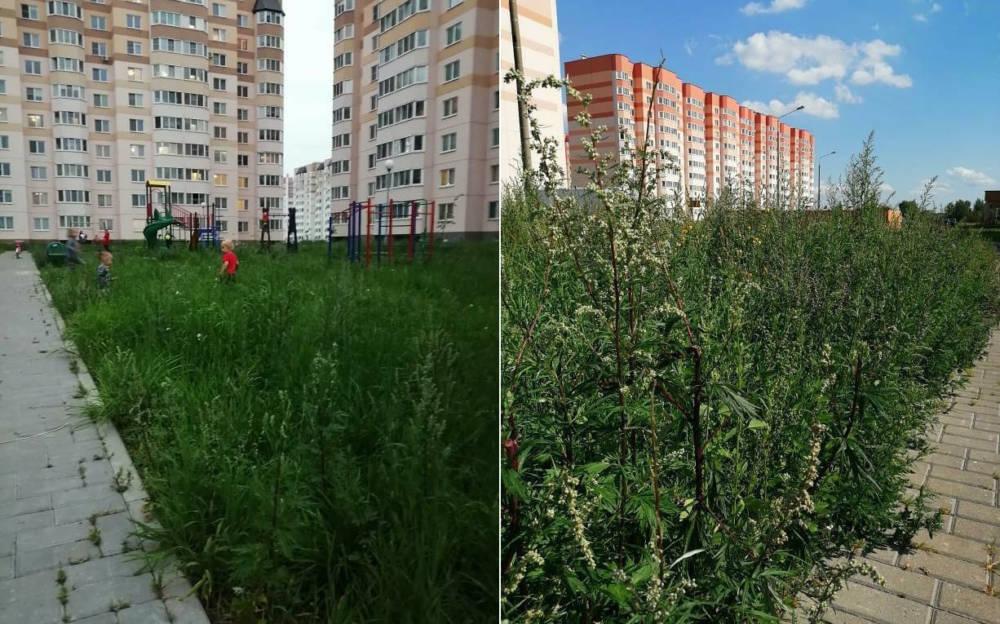 Гомельчанка возмутилась высотой травы возле дома: Маленькие детки просто теряются