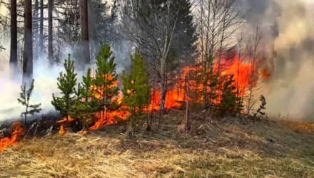 В Гомельской области введён запрет на посещение лесов в девяти районах