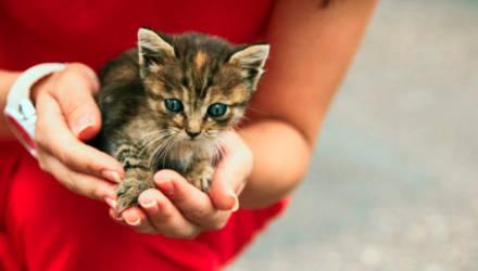 """17 августа в Гомеле состоится благотворительный концерт """"МЫ в ответе..."""" в поддержку бездомных животных"""