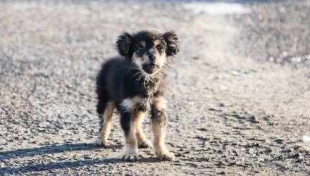 В Вилейском районе неизвестные били собаку молотком, сверлили дрелью, а затем выбросили в яму-туалет