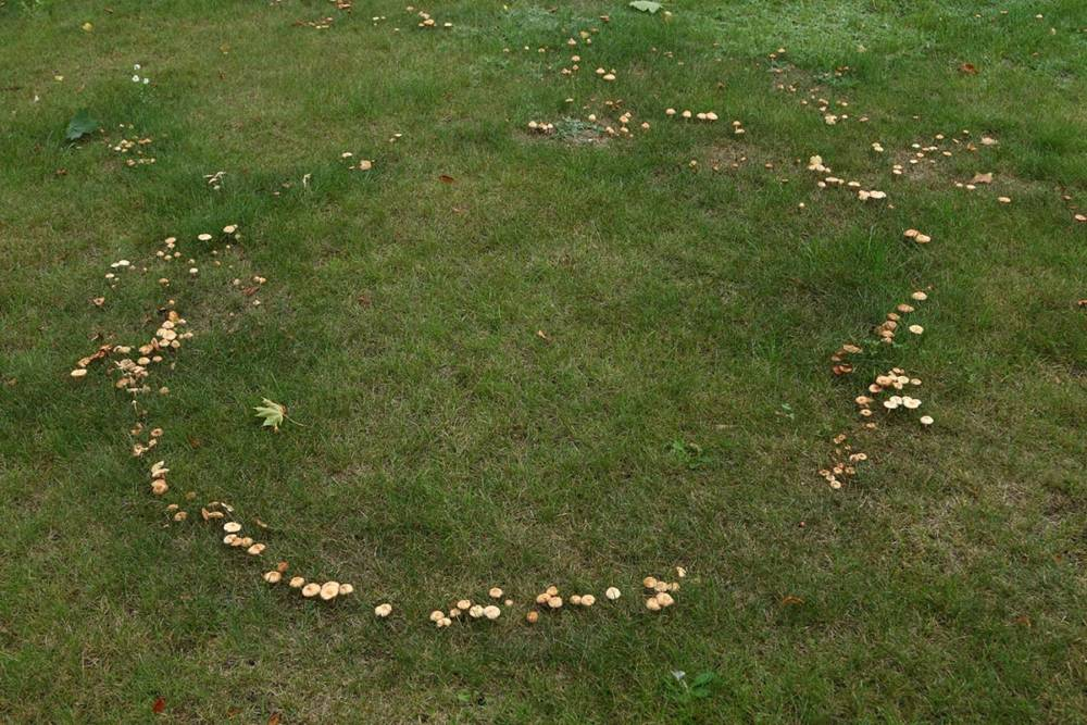 На Гомельщине фотограф заснял ведьмины круги возле райисполкома