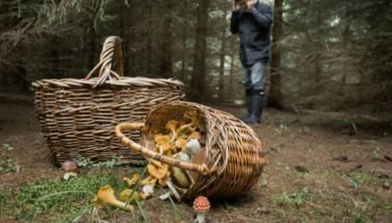 На Гомельщине нашли грибника, который три дня провёл в лесу и остался жив