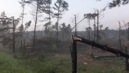 Бурелом и 39 населённых пунктов без света. В МЧС и Гомельэнерго рассказали о последствиях прохождения грозового фронта