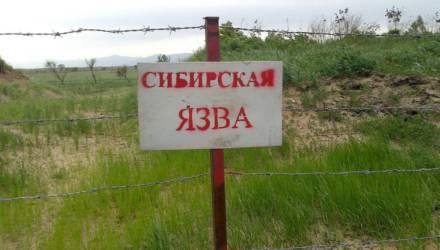 В Беларуси впервые с 1999 года зафиксировали сибирскую язву