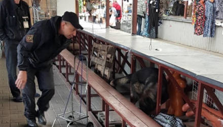 На Гомельском центральном рынке служебная собака нашла спрятанный под прилавком насвай