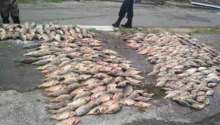 """Криминальные будни Гомельщины: безработный сетями выловил 280 кг рыбы, двое менял лишились валюты """"где-то на пароход"""", бульдозер переехал 3 тонны конопли"""