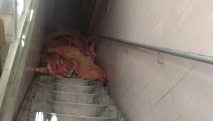 В магазине гомельчан смутили свиные туши на лестнице и тараканы в коробке. Руководство приняло меры: двое лишены премий, с одним расторгнут договор