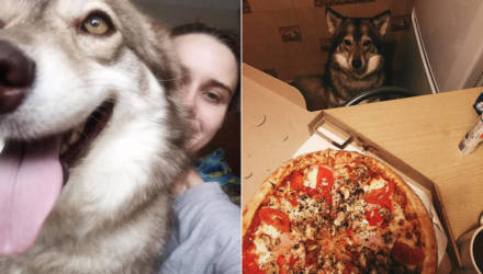 «А маму - в дом престарелых?!» Белоруску, которая хотела отдать свою собаку, затравили в соцсетях