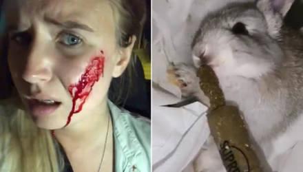 Фермеры покалечили веган-активистку, спасшую кроликов