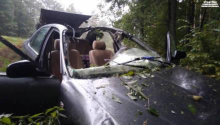 Очередной лось внезапно выбежал на трассу в Жлобинском районе – двое пострадавших