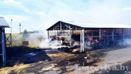 Мужчина, который спас колхозного коня с горящей фермы в Наровлянском районе, умер от ожогов