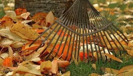 Самые важные работы в саду, которые надо сделать до зимы