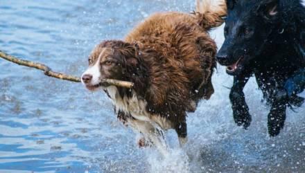 Ветеринары сообщили, какие продукты нельзя давать собакам