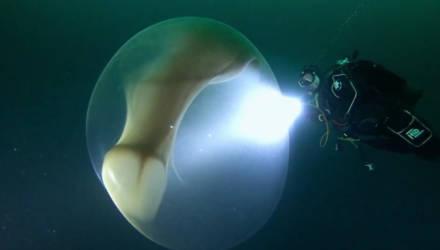 В Северном Ледовитом океане сняли на видео редкое явление