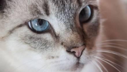 Попал под капельницу. Оставленный без присмотра кот спарился с пятью кошками