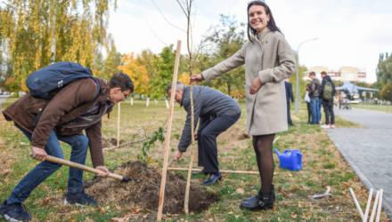 Получили билет и высадили дерево: в ГГТУ имени П. О. Сухого прошла акция «Здравствуй, первокурсник!»