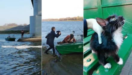 Доброта спасёт мир. В Гомеле неравнодушная девушка Настя спасла котёнка, который неизвестно как оказался на опоре моста, окружённый со всех сторон водой