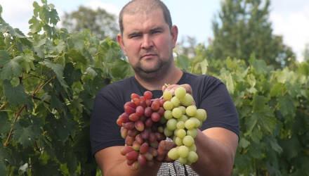 Гомельчанин Александр Дубовский на участке в пять соток выращивает 90 сортов и гибридных форм солнечной ягоды