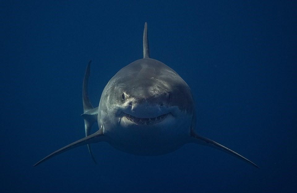 14 снимков акул от самого безбашенного фотографа на планете