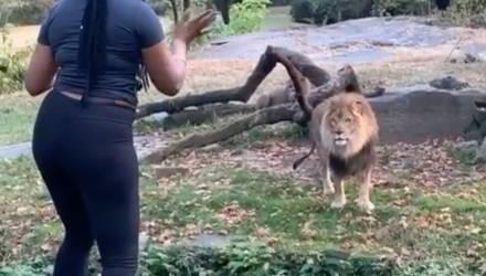 Девушка подразнила льва, забравшись в вольер, и его реакция сразила всех — видео