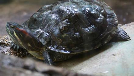 Умерла самая древняя черепаха в мире – ей было 344 года