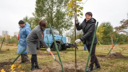 Дворы украсили рябины и ясени: в Гомеле высадили 12 359 деревьев
