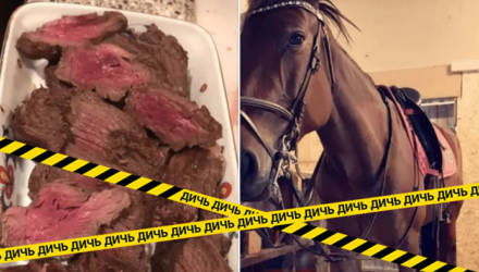 Наездница съела своего коня, выложив рецепт, и теперь её все ненавидят и угрожают расправой