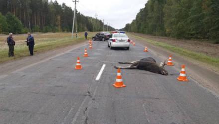 Новое средство для отпугивания диких животных от дорог испытывают на Гомельщине
