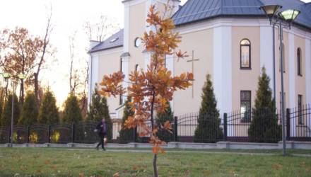 Возле костёла в Гомеле выросло дерево в форме креста