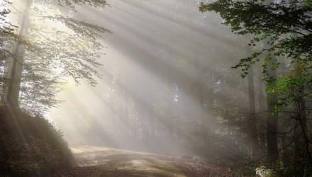 На Гомельщине ищут заблудившихся в лесу пожилых сельчан