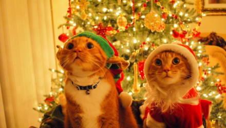 А 31-го работаем! Какими будут новогодняя и рождественская недели после переносов выходных