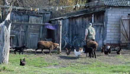 Под Гомелем дикие собаки терроризируют деревню: нападают на людей и уничтожают домашний скот и птицу