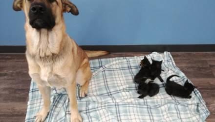 Бездомная собака спасла от смерти пятерых котят и прославилась в Сети