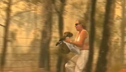 Храбрая девушка бросилась в горящий лес, чтобы спасти раненую коалу — видео