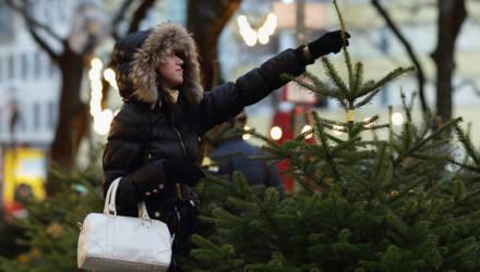 Елочные базары в Гомельской области начнут работу 23 декабря. Что почём?