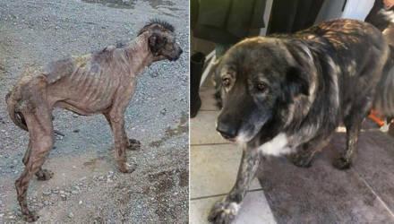 Пёс, похожий на живой скелет, невероятно изменился через 2 года после спасения